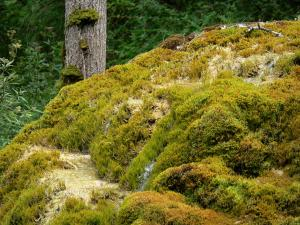 Étufs waterfall - Mosses of the petrifying waterfall; in the town of Rouvres-sur-Aube