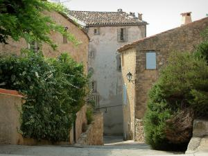 Fayence - Sloping narrow street lined with shrubs, creepers, and houses