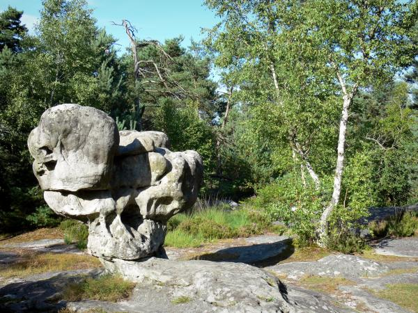 Fontainebleau Forest Tourism Amp Holiday Guide