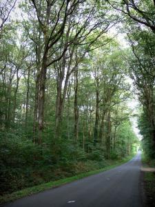 Forêt de Chandelais - Road lined with trees
