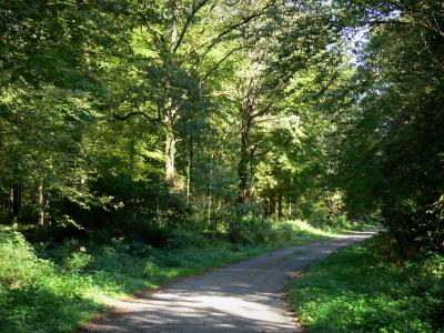 La forêt - Emile Verhaeren Foret-mormal-13784_w400
