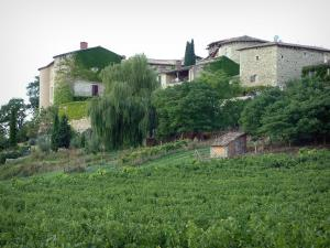 Gaillac vineyards - Houses overhanging a vineyards (Gaillac vineyards)