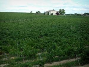 Gaillac vineyards - Vineyards and houses (Gaillac vineyards)
