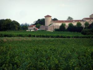 Gaillac vineyards - Vineyards, trees and residence (Gaillac vineyards)