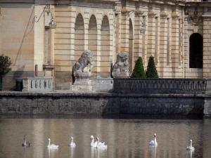 Gardens of the Palace of Fontainebleau - Swans on the Carp pond and statues of the Fountain courtyard