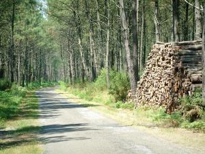 Gascon Landes Regional Nature Park - Small road through a pine forest