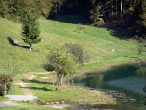 Genin lake - Trees and meadows along the water in the Jura mountain range (Upper Bugey), in the towns of Charix, Échallon and Oyonnax