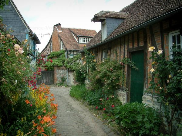 Gerberoy - Narrow paved street with climbing rosebush (roses), flowers, plants and half-timbered houses