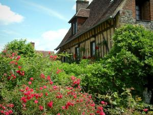 Gerberoy - Rosebushes (roses), wisterias and half-timbered house