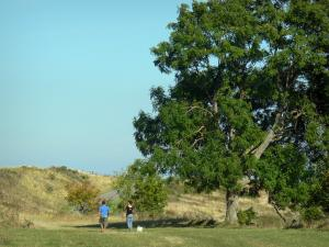 Gergovie plateau - Walkers visiting the commemorative monument, tree; in La Roche-Blanche
