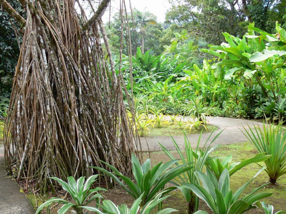 Foto giardino di balata 40 immagini di qualit in alta - Giardino tropicale ...