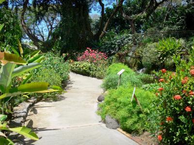 Il giardino botanico di deshaies guida turismo e vacanze for Au jardin tropical guadeloupe