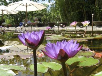 Turismo in aquitania guida vacanze e weekend - Giardino delle ninfee ...