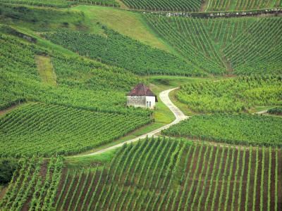 Famous vineyards