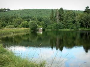 Great lakes of the Morvan - Saint-Agnan lake (artificial lake) and its wooded bank; in the Morvan Regional Nature Park
