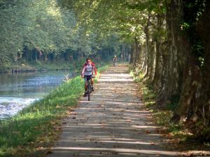 Greenway of the Garonne canal - Bicycle lane of the Voie Verte greenway with cyclists, plane trees (trees) and Garonne canal; in Damazan