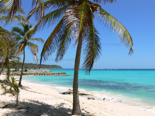 Guadeloupe beaches - Feuillère beach, on the island of Marie-Galante: coconut palms and white sand beach overlooking the turquoise lagoon
