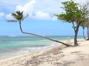 Guadeloupe beaches - Autre Bord beach on the island of Grande-Terre, in the town of Le Moule: sand, coconut palms, sea grapes and lagoon