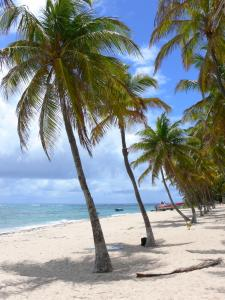 Guadeloupe beaches - Souffleur beach on the island of La Désirade: sandy beach and coconut trees