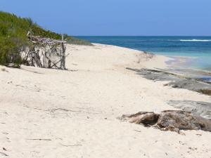 Guadeloupe beaches - Beach of the Feuillard cove on the island of Marie-Galante: white sand and turquoise lagoon