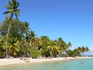 Guadeloupe beaches - Caravelle beach on the island of Grande-Terre, in the town of Sainte-Anne: relaxing on the sandy beach lined with coconut trees and swimming in the turquoise lagoon