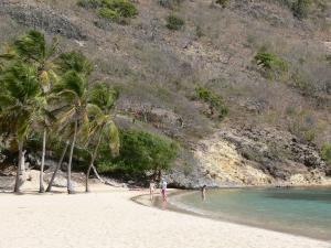 Guadeloupe beaches - Pompierre beach in Les Saintes archipelago, on the island of Terre-de-Haut: white sand, coconut palms and turquoise lagoon
