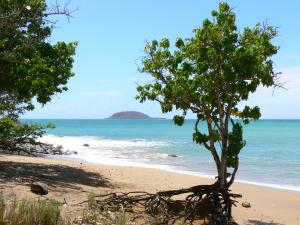 Guadeloupe beaches - Beach of the Îles cove, on the island of Basse-Terre, in the town of Sainte-Rose: beach dotted with trees overlooking the sea and the Kahouanne islet