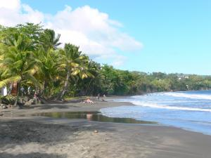 Guadeloupe beaches - Grande Anse beach on the island of Basse-Terre, in the town of Trois-Rivieres: black sand beach lined with coconut trees and sea waves