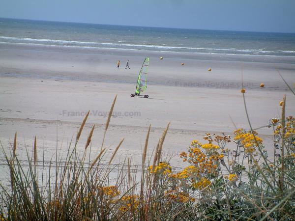 Hardelot-Plage - Opal Coast: plants (psammophytes, beachgrass) and wild flowers, sandy beach with someone speed-sailing (windsurfing board with wheels), the Channel (sea); in the Regional Nature Park of Opal Capes and Marshes