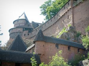 Haut-Koenigsbourg castle - Fortress and a tree