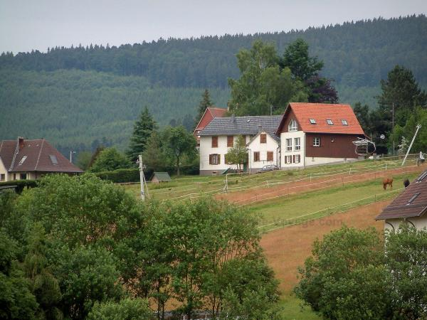 Hohwald - Trees, meadow with horses, houses and forest