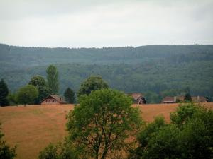 Hohwald - Trees, perched houses on a hill and a forest in background