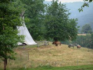 Hohwald - Trees, meadow, tent, horses and forest in background