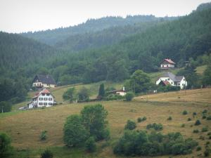 Hohwald - Trees, houses and forest