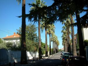Hyères - Street lined with palm trees