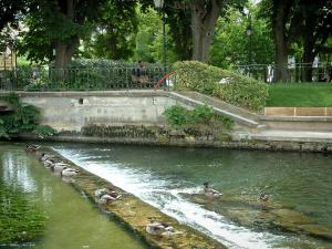 L'Isle-sur-la-Sorgue - The River Sorgue with ducks, park and trees in background