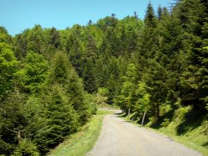 Issaux forest - Small tree-lined road