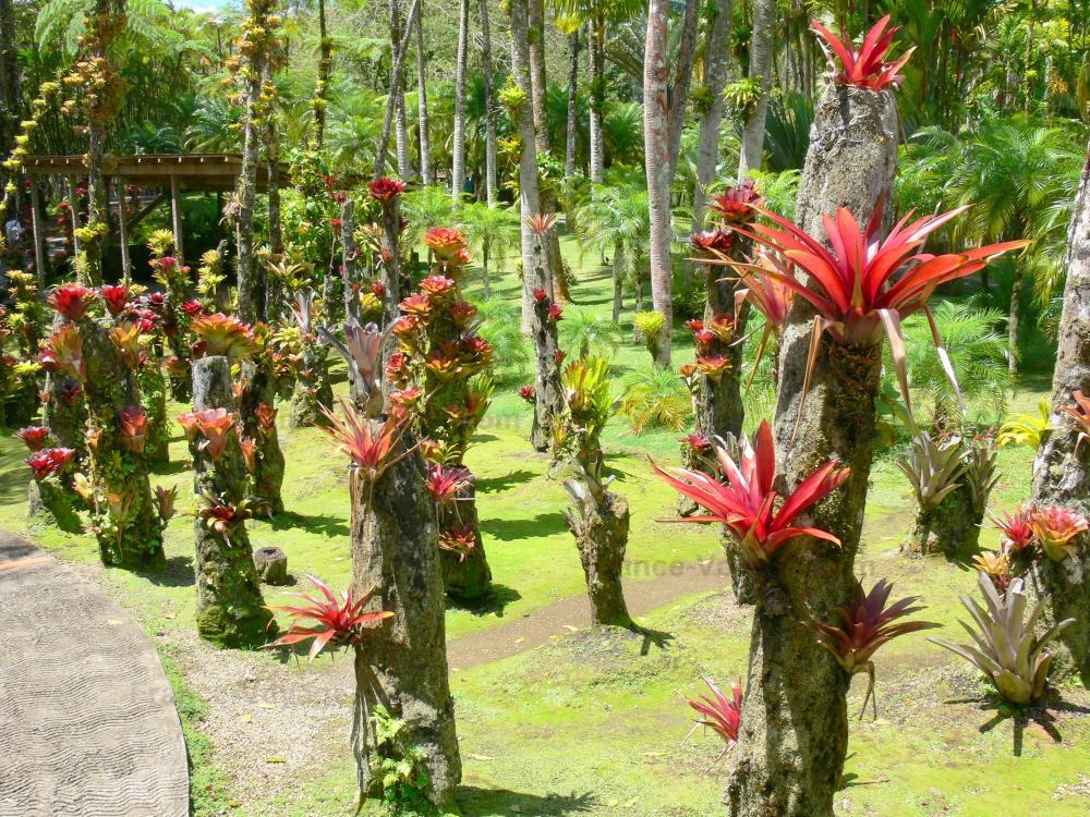 Photos le jardin de balata guide tourisme vacances - Comment aller au jardin d acclimatation ...