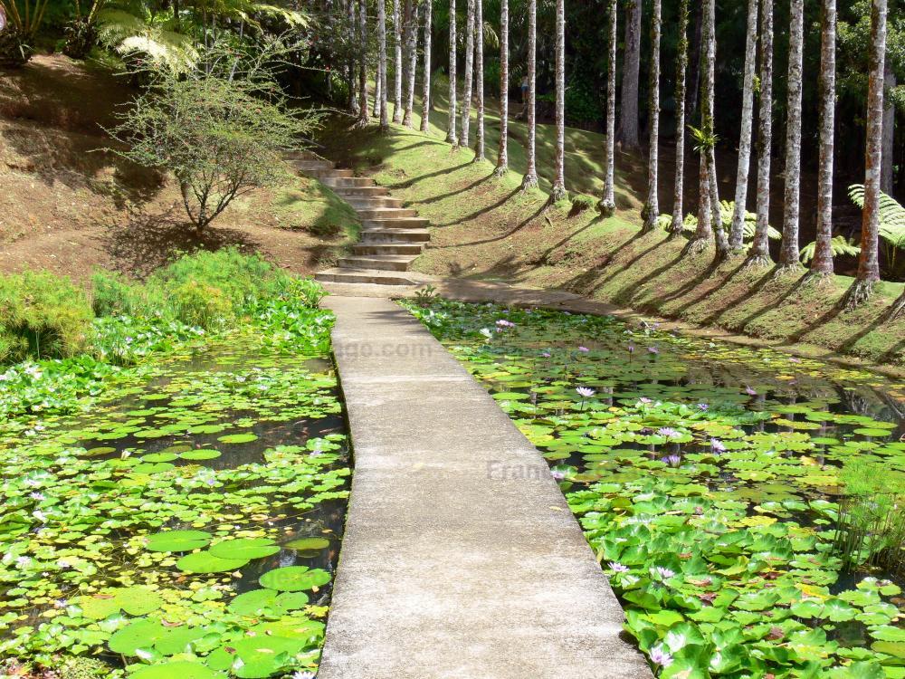Photos jardin de balata 40 images de qualit en haute for Jardin definition