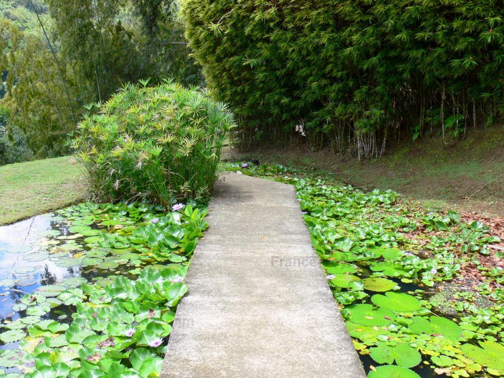 Photos jardin de balata 40 images de qualit en haute for Jardin meaning
