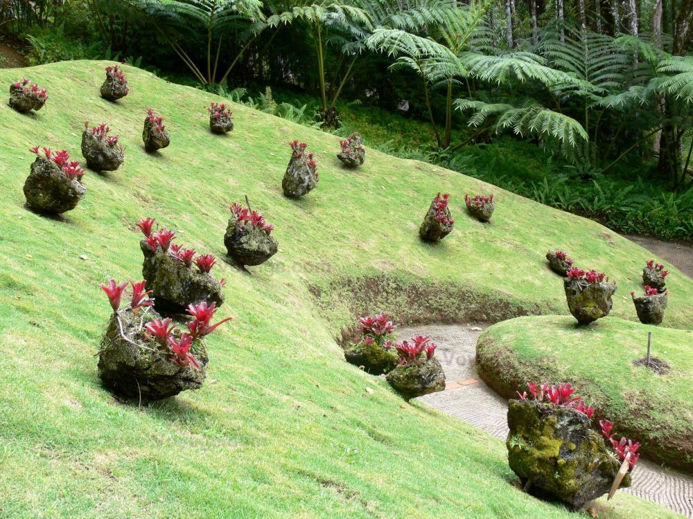 Photos jardin de balata 40 images de qualit en haute for Definition de jardin