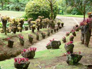 Jardin de balata 40 images de qualit en haute d finition for Definition jardin