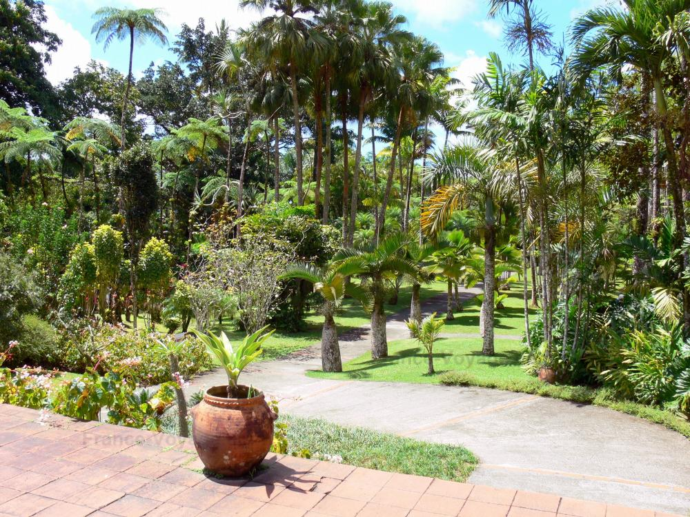 photos le jardin de balata guide tourisme vacances. Black Bedroom Furniture Sets. Home Design Ideas