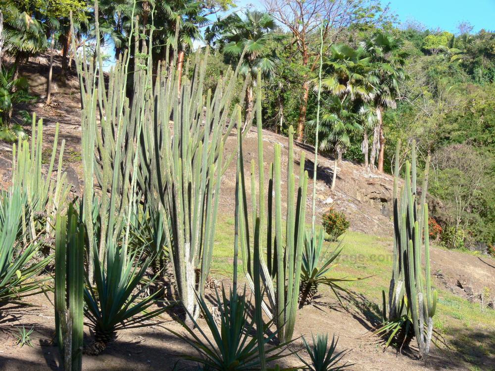 Photos jardin botanique du carbet habitation latouche for Definition du jardin