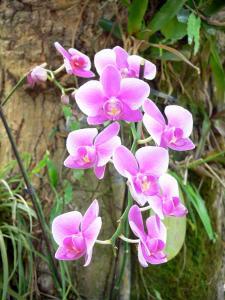 Jardin botanique de Deshaies - 42 images de qualité en haute définition