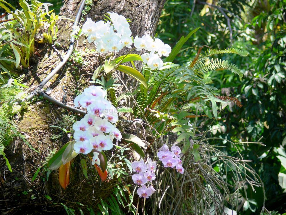 Photos Jardin Botanique De Deshaies 42 Images De Qualit En Haute D Finition