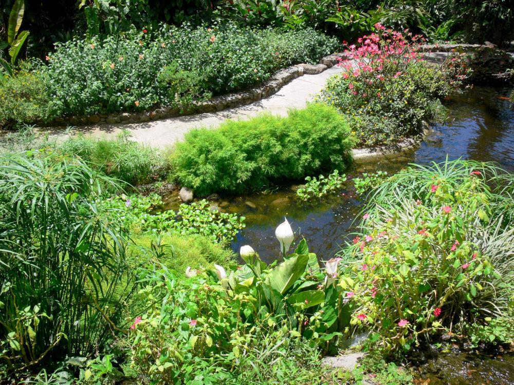 Photos le jardin botanique de deshaies guide tourisme - Mur d eau jardin ...