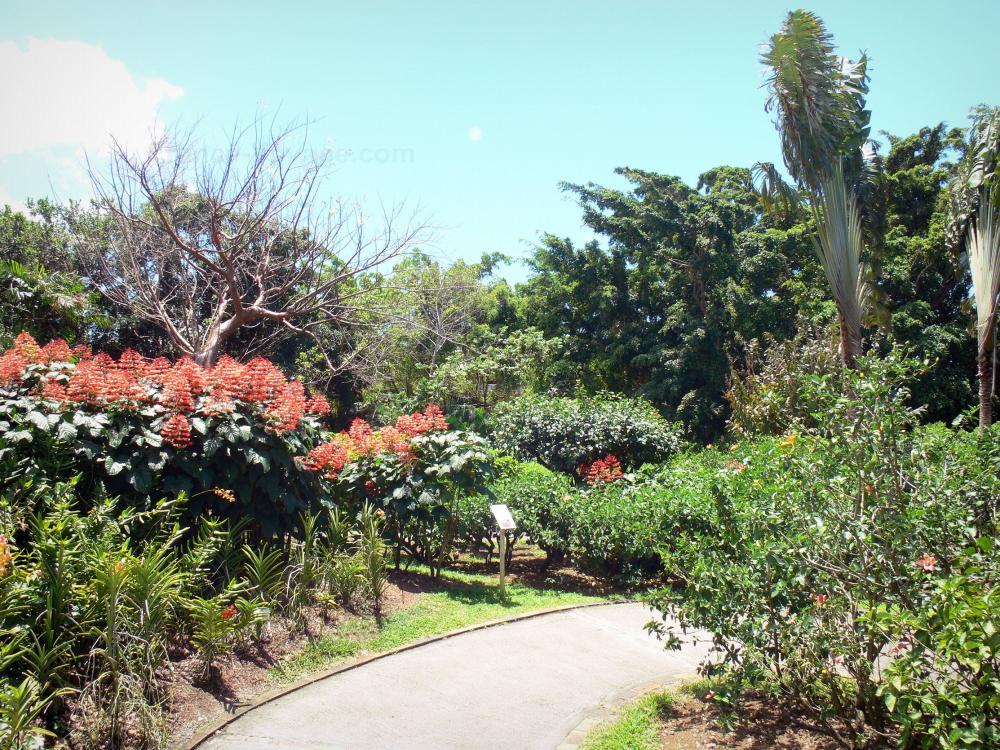 Photos le jardin botanique de deshaies guide tourisme for Camping jardin botanique
