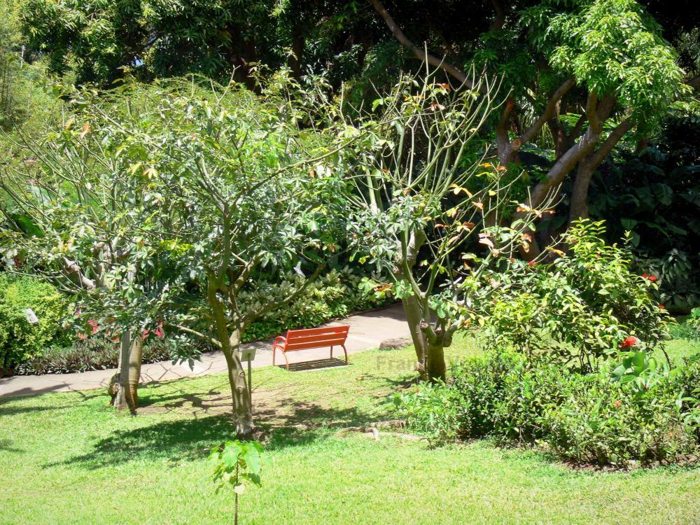 Photos le jardin botanique de deshaies guide tourisme for Camping le jardin botanique limeray