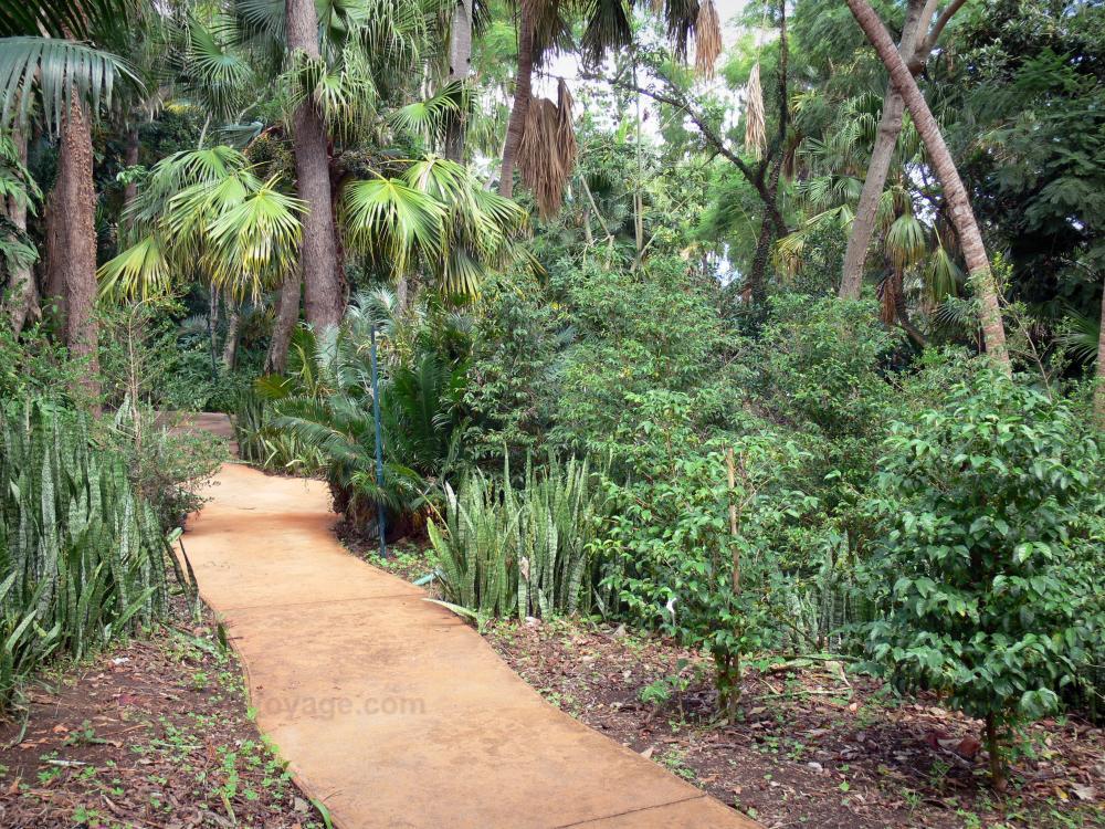 Photos jardin botanique de la r union 27 images de for Jardin definition
